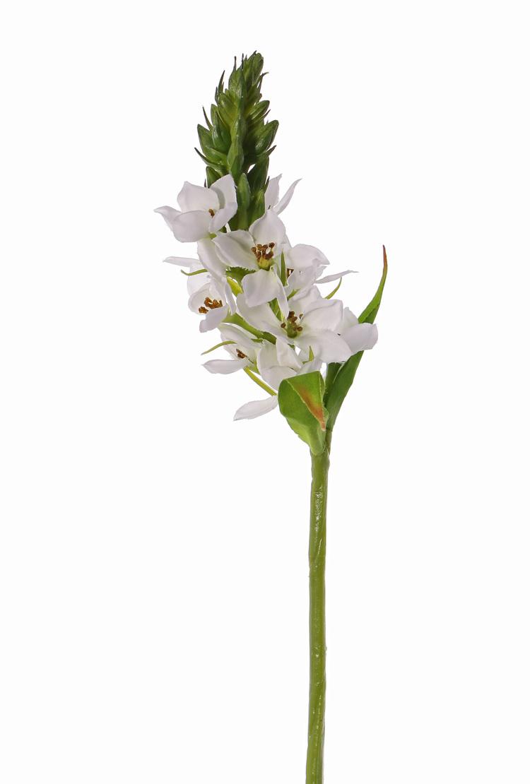 Ornithogalum (Ster van Bethlehem) 1 bloem, 2 blad & softplastic knop, 50cm