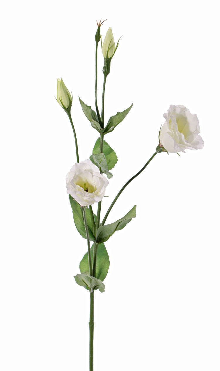 Lisianthus (Eustoma) 2 flowers (Ø 5cm), 2 flower buds, 2 buds & 8 lvs., 70cm