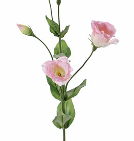 Lisianthus (Eustoma), 2 flores (Ø 5cm), 2 capullos poco abiertos, 2 buds & 8 hojas, 70cm