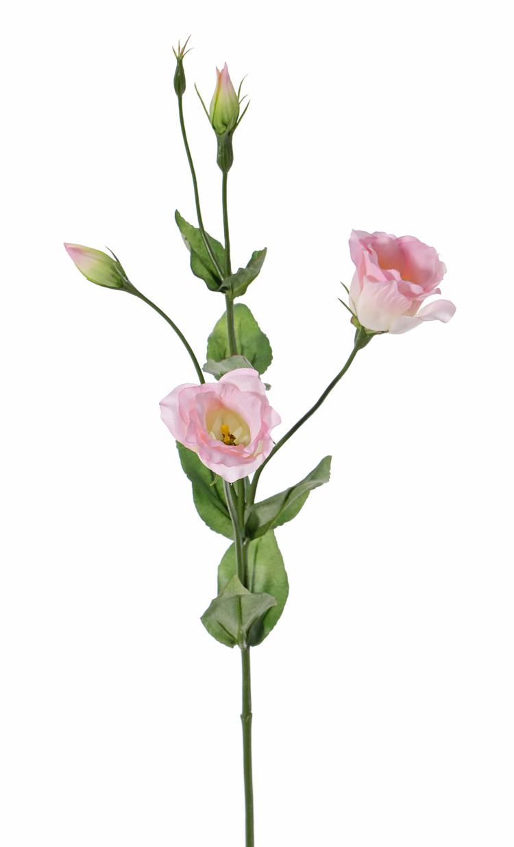Lisianthus (Eustoma) 2 bloem (Ø 5cm), 2 bloemknop, 2 knop & 8 blad, 70cm