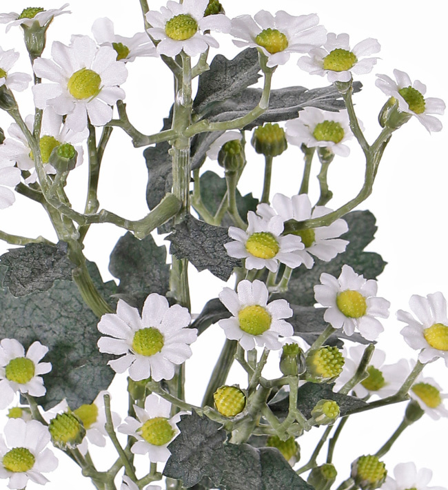 Tanacetum 'AutumnBreeze' x9 , 34 flores, (Ø 1,5 - 2cm), 20 capullos, 16 hojas, 60cm