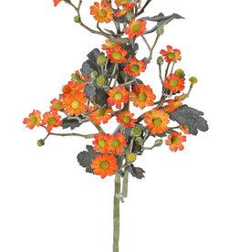 Tanacetum (Wormkuid) 'AutumnBreeze', x9, 34 bloem (Ø 1,5 - 2cm) & 20 knop,16 blad, 60cm