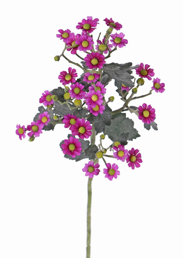Tanacetum (tansies) 'AutumnBreeze', 34 flowers (Ø 1,5 - 2cm) & 20 buds, 16 lvs., 60cm