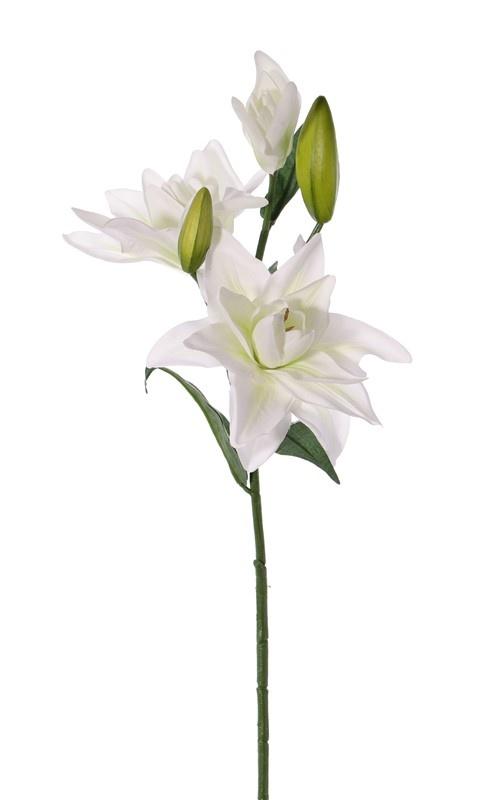 Amaranto Caudatus doble 'AutumnBreeze', 5 flores, 5 hojas,  125cm