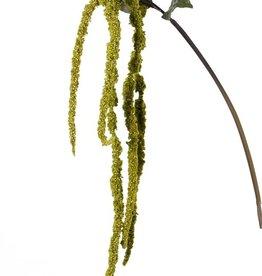 Amaranto Caudatus 'AutumnBreeze', 5 flores, 5 hojas,  125cm