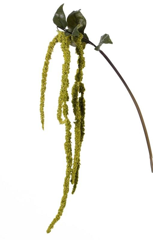 Amaranthus caudatus (Fuchsschwanz, Tausendschön) 'AutumnBreeze', 5 Blütenstände, 5 Blätter, 125cm