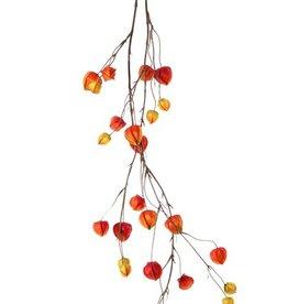 Physalis-Girlande mit 2 Verzweigungen, 'AutumnBreeze', 28 Kelche (10Lg/9Md/9Sm), 120cm