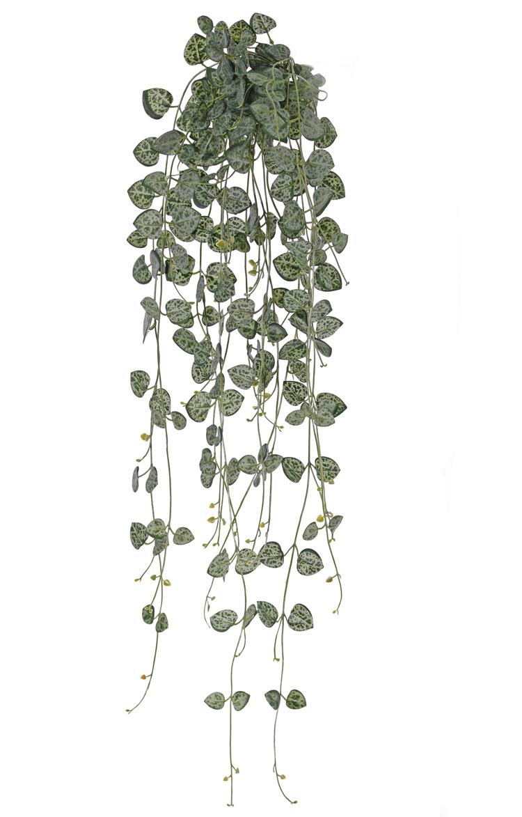 Ceropegia (Chinees lantaarnplantje) 258 blaadjes, UVsafe, 70cm
