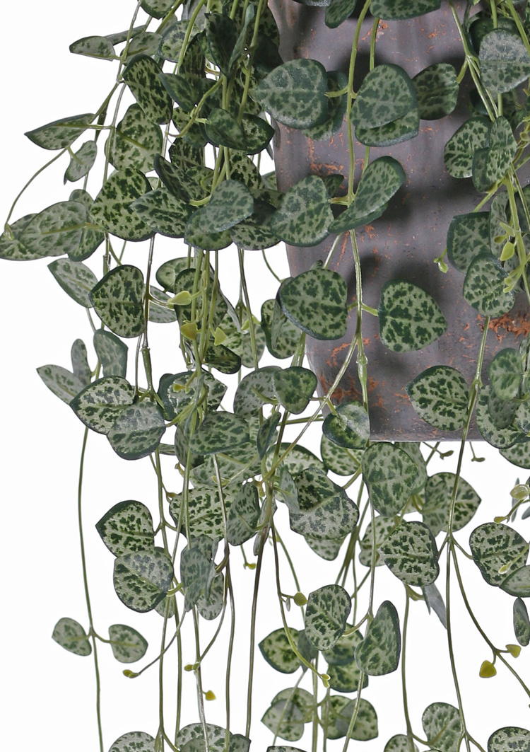 Ceropegia (string of hearts, chain of hearts) 258 leaves, UV safe, 70cm