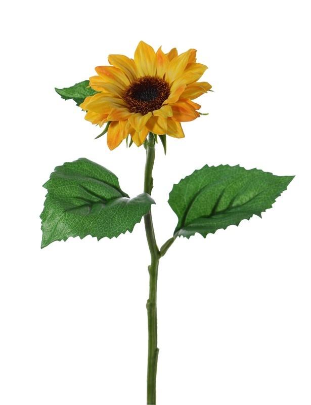 Sunflower (Helianthus) small, Ø 8cm & 3 lvs., 35cm