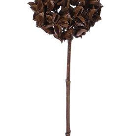Steranijs (Illicium verum) 'Dried nature', decobal Ø 10cm, op steel, 70cm
