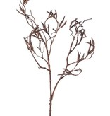 """Birch spray with 60 fruits (Betula)""""Dried Nature"""", 90cm"""