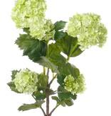 Viburnum 53cm
