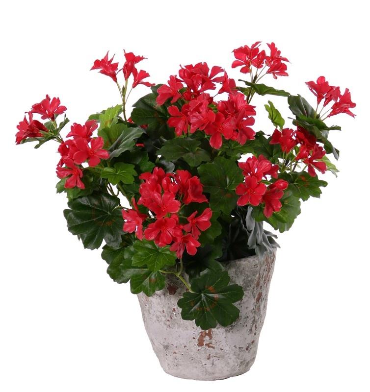 Oesterreichische Geranien (Pelargonium) 40cm, mit 92 Blättern u. 108 Blüten u. mit Knospen, by MK!, UV sicher