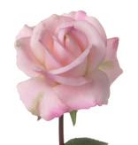 Rosa Caroline, real touch, 70cm, Ø7,5cm