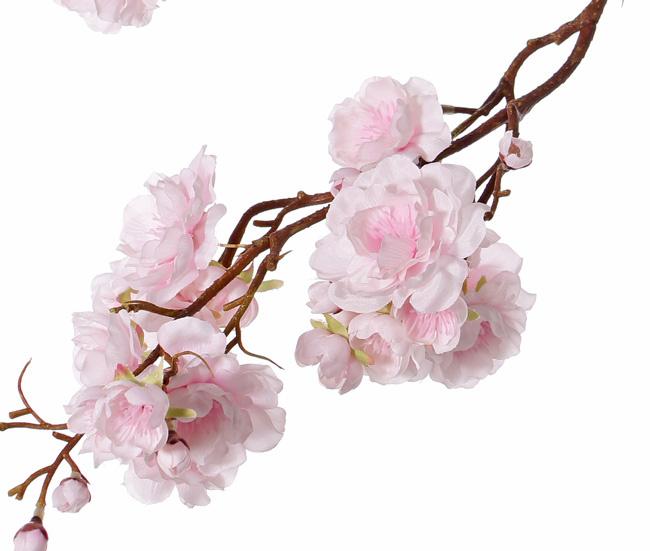 """Prunus serrulata (Japanische Zierkirsche) """"Full blossom"""", 51 Blüten, (16 gr., 11 mittel, 24 klein) 19 Knospen, 91cm"""