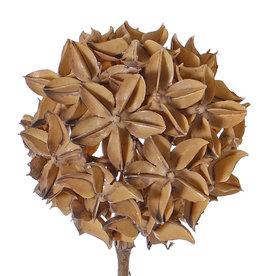 Star anise spray (Illicium verum) 'Dried Nature', deco ball, Ø 10cm, on stem, 70cm