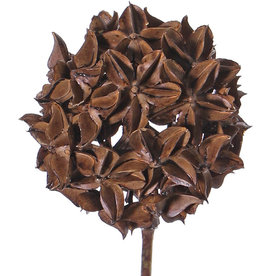 Steranijs (Illicium verum) 'Dried nature', decobal Ø 10cm, op steel, 70cm