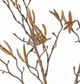 rama de Betuláceas con 60 amentos 'Dried Nature', 90cm