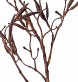 "Berkentak (Betula)""Dried nature"", x2 60 katjes, 90cm"