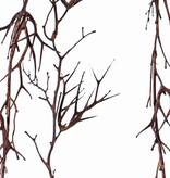 "Christusdoorn (valse) slinger (Gleditsia triacanthos) """"Dried nature"""" x12clusters, 180cm, speciale prijs"