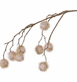 Platanusspray (Platanus acerifolia), 8 fruits (Ø 3,5cm), 81cm