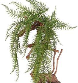 Wurzelnder Kettenfarn (Woodwardia) , 7 Verzweigungen, 55 Farnblätter, 70cm - UV sicher
