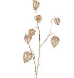 Physalistak (Lampionplant) x3, 8 kelken, (2Lg/4Md/2Sm), 78cm