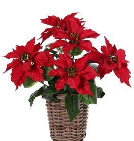 Poinsettia (Christmas flower) bush, 5 big flowers (Ø 20cm), h.45cm /Ø 45cm