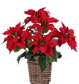 Poinsettia (Kerstster) bush, 5 bloemen (Ø 20cm), h.45cm /Ø 45cm