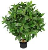Lorbeerbäumchen (Laurus) auf Holzstamm, 666 Blätter, Ø 40cm,  50cm, UV sicher