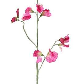 Lathyrus - Wicken, 3 Verzweigungen, 10 Blüten & 4 Knospen, 64cm