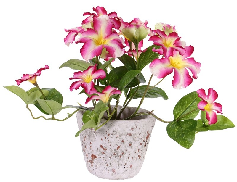 Petunia, 16 flowers, (4 Lg/8 Me/4 Sm) & 12 lvs.,  Ø 30cm