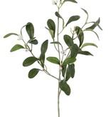 Mistletoe , 12 berries,  36 leaves, 55 cm