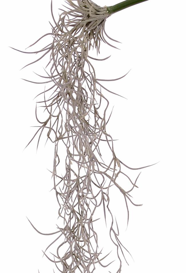 Tillandsiahänger (Spanisches Moos) schmal, 12 Stränge, 125cm