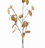 Lunaria annua 'Classico', x5, 25 semillas, (19lg/6sm), 91cm (cada en polybag)