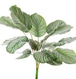 Calathea orbifolia, 16 bladeren, natural touch, 76cm