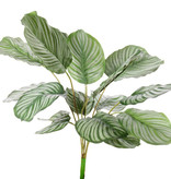 Calathea orbifolia, 16 leaves, natural touch, 76cm