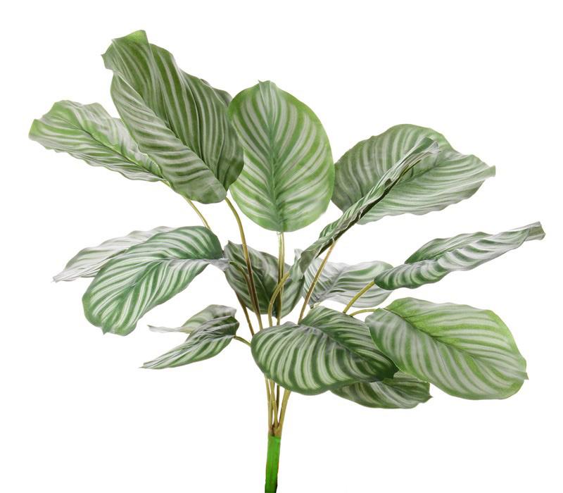 Calathea orbifolia, 16 Blätter,  natural touch, 76cm