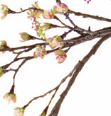 Maple fruit (Acer) branch, x27fruits, x8flrs, 111cm