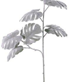 Monstera-Zweig 'Frost' mit 2 Verzweigungen, 7 Blätter, Ø 11cm, 71cm