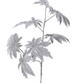Papayablattzweig 'Frost' mit 2 Verzweigungen, 7 Blätter, Ø 13cm, 73cm