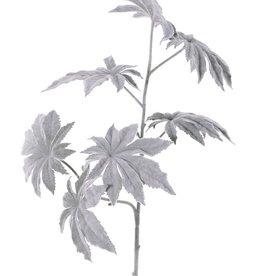 Rama de Papaya 'Frost' x2, 7 hojas, Ø 13cm, 73cm