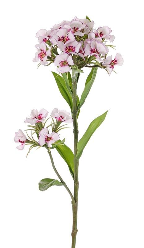 Dianthus barbatus (Duizendschoon) 2 clusters bloemen & 10 blad, 60cm