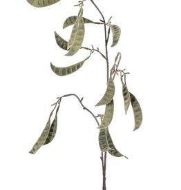 Schotenzweig - Zuckererbsenzweig 'AutumnBreeze' 9 Verzweigungen, 16 Schoten, beflockt, 90cm