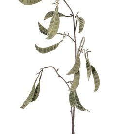 Snow pea 'AutumnBreeze', 16 pods, flocked, 90cm
