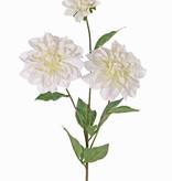 Dahlia 'New Beauty', 3 bloemen & 5 bladeren, 76cm