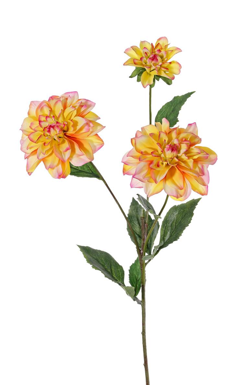 Dahlia 'New Beauty', 3 flowers & 5 lvs., 76cm