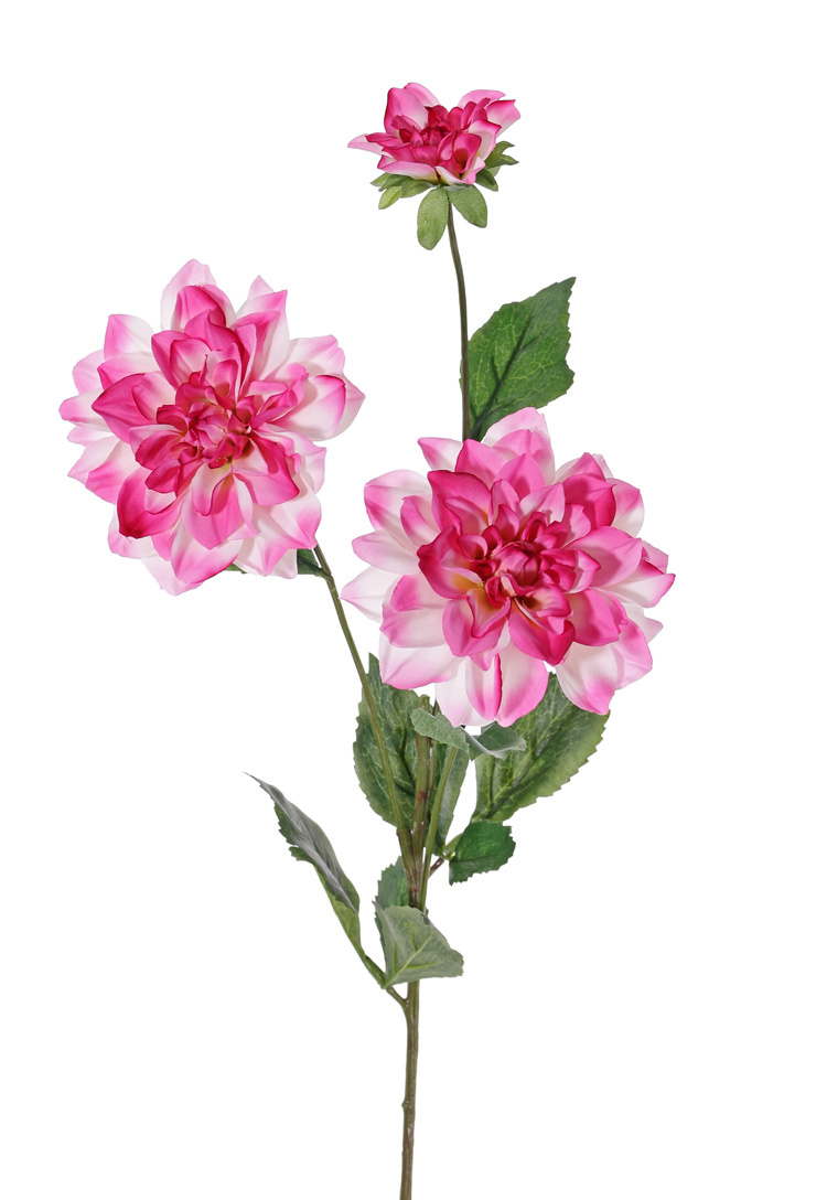Dahlie 'New Beauty', 3 Blumen & 5 Blätter, 76cm