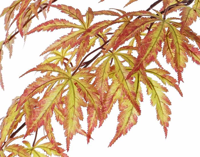 Ahorn, japanischer, 70 cm, 36 Blätter, herbstfarben